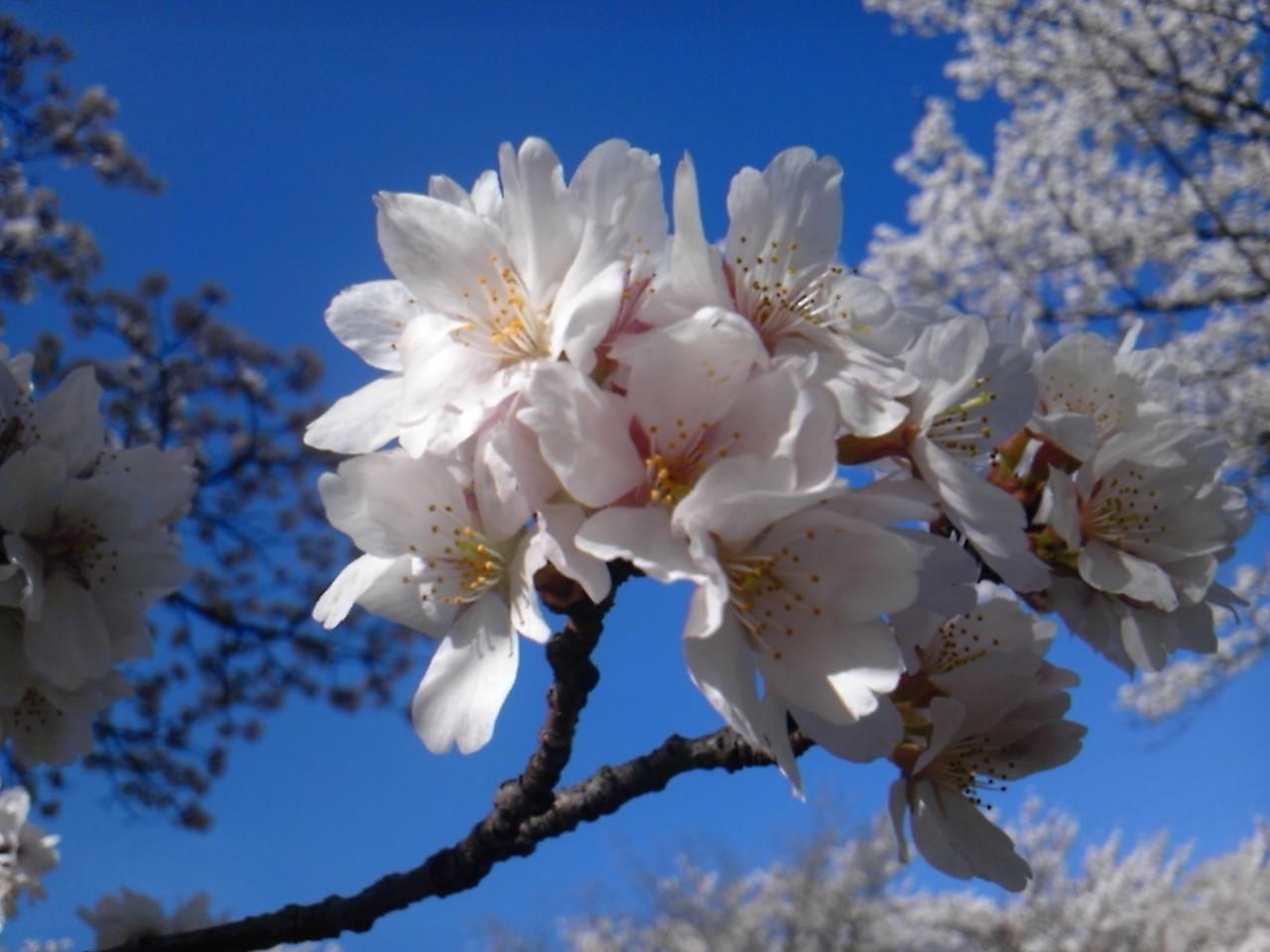 * 花より葉っぱ *